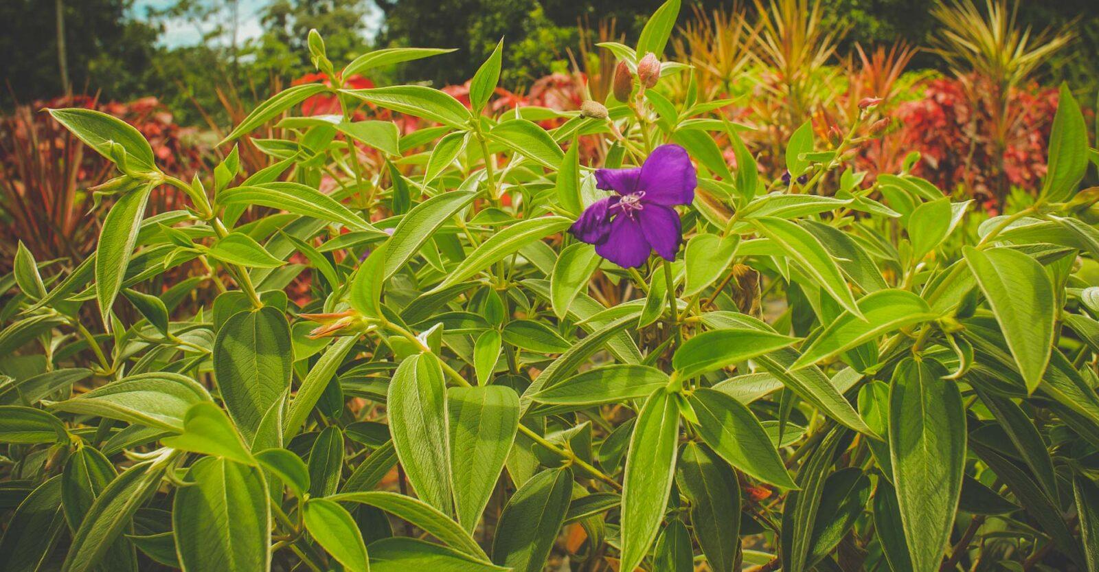 nature costa rica flowers