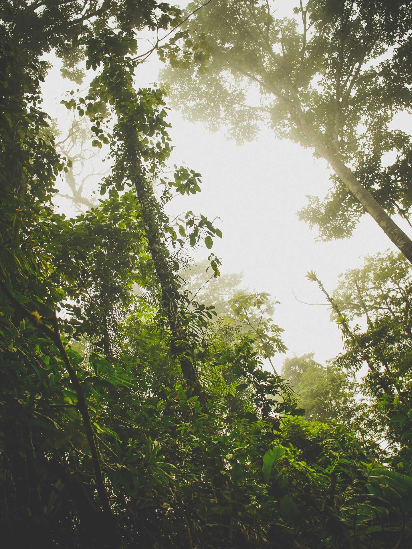 mist jungle costa rica