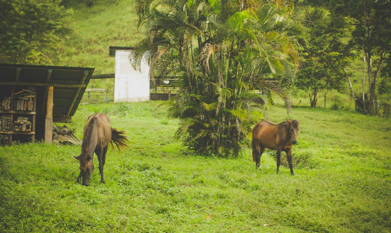 horses brett's ark