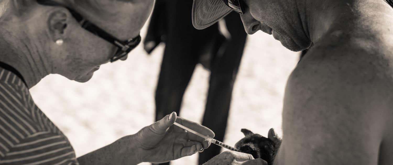 Puppy Crisis San Pedrito Baja California
