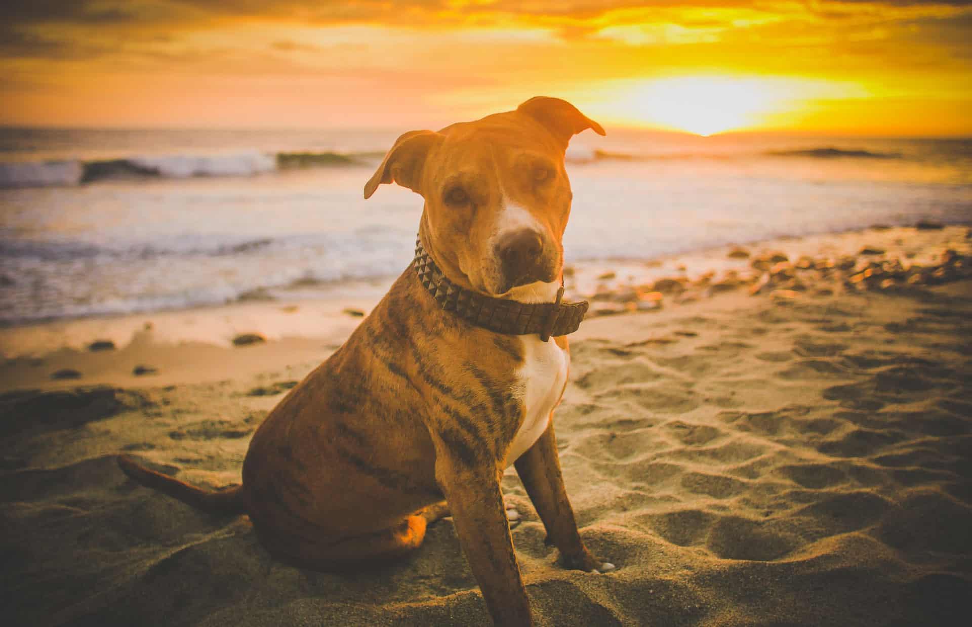 dog beach sundown